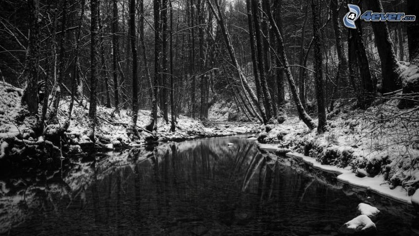 snöig skog, flod, svartvitt foto