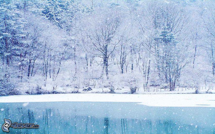 snöig skog, frusen sjö