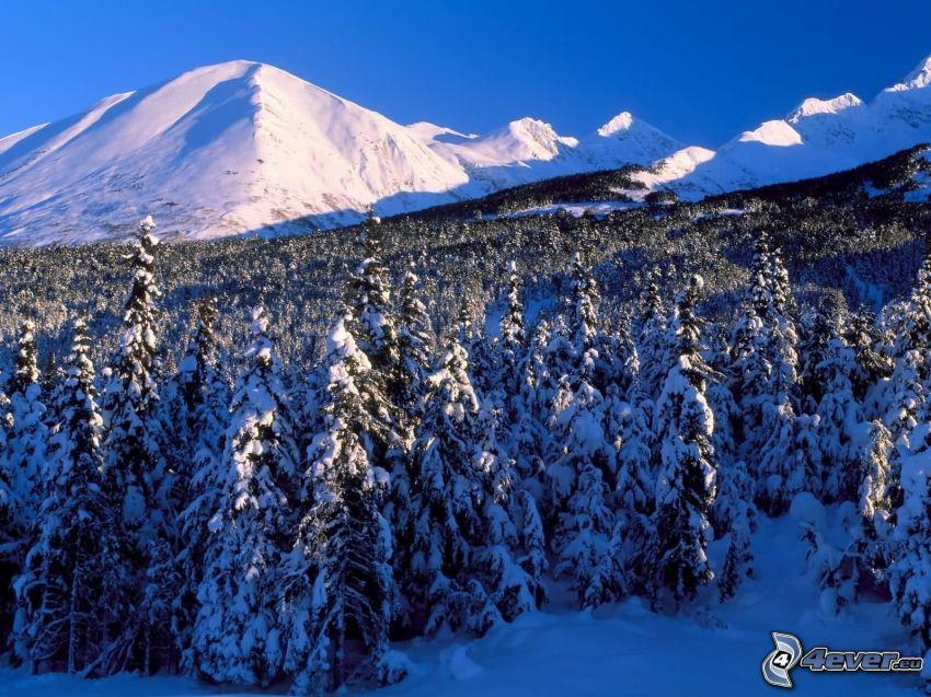 snöig skog, kulle