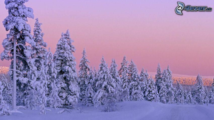 snöig skog, lila himmel