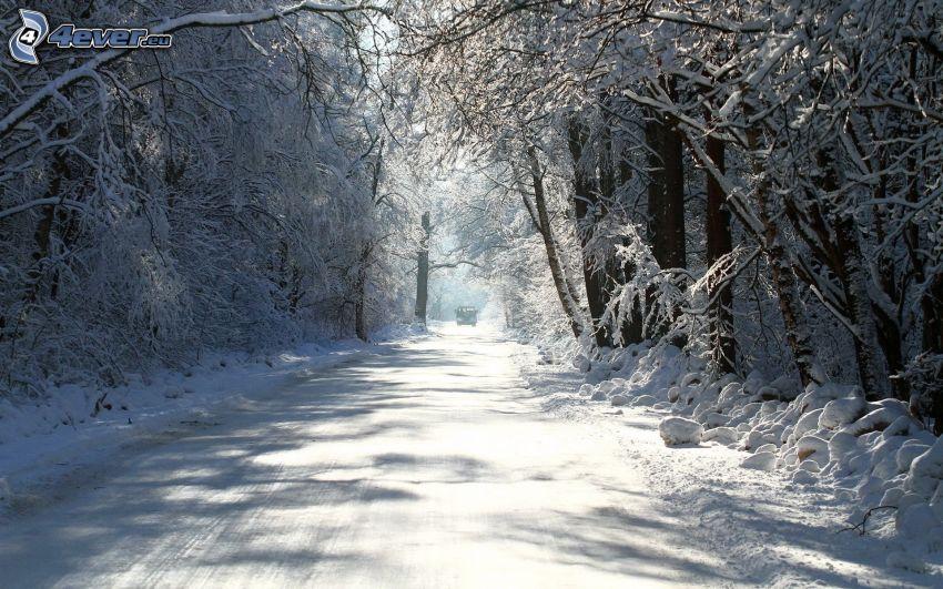 snöig skog, skogsväg