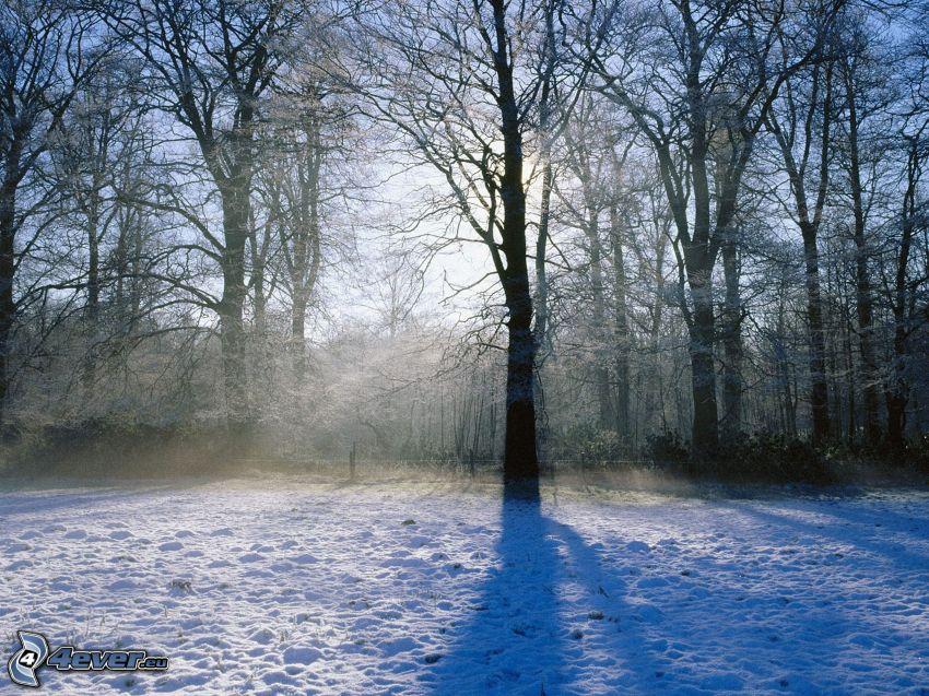 snöig skog, snö
