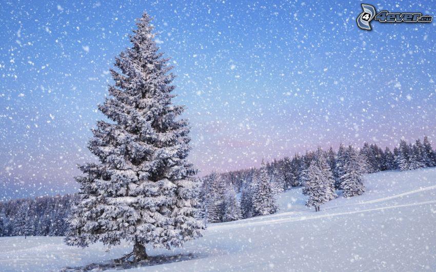 snöig skog, snöfall, backe