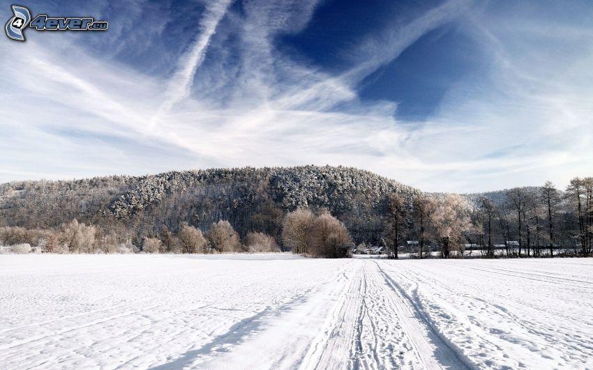 snöig skog, snöig äng, spår i snön