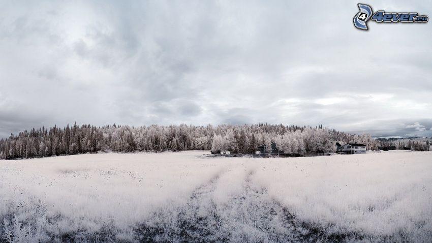 snöig skog, snöig äng