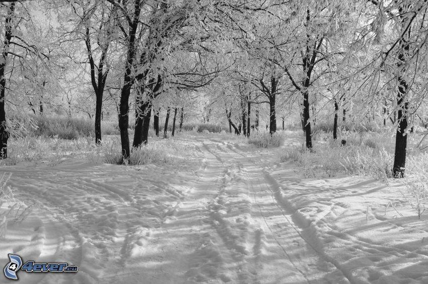 snöig skog, snöig väg