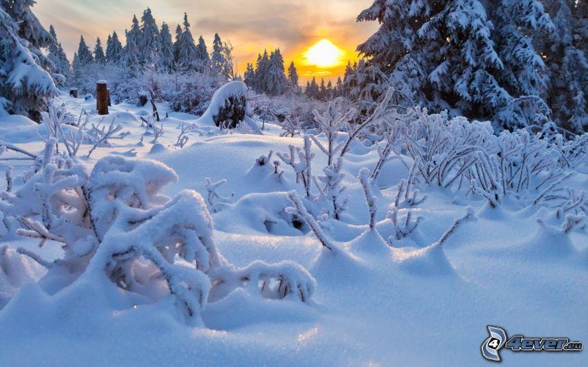 snöig skog, solnedgång på vintern