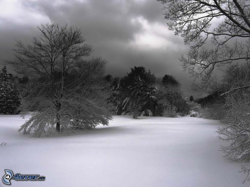 snöig skog, svart och vitt
