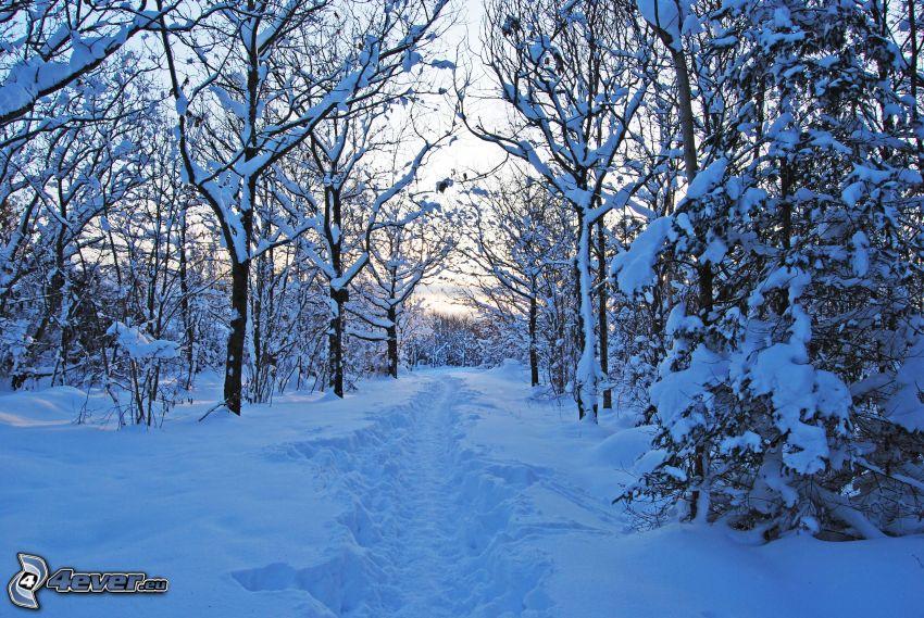 snöig skog, trottoar