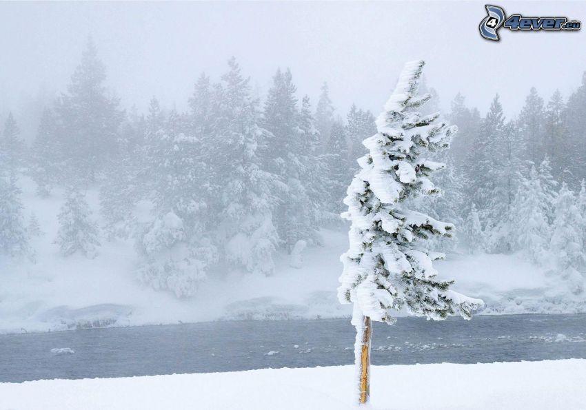 snöigt landskap, snöigt träd, bäck