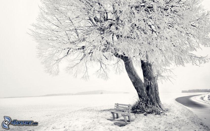 snöigt träd, bänk