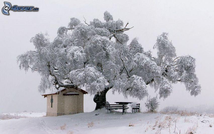 snöigt träd, kapell, snötäckta bänkar