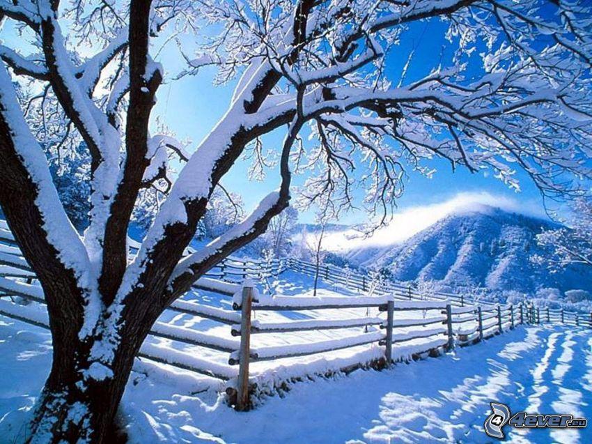 snöigt träd, staket, kulle
