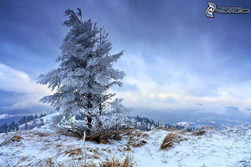 snöigt träd