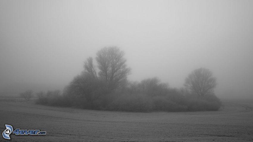 snöklädda träd, åker, dimma