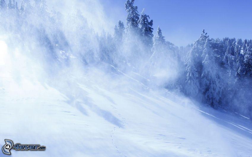 snöklädda träd, backe, snö
