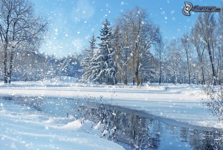 snöklädda träd, flod, snöfall