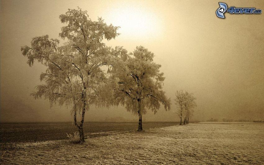 snöklädda träd, sepia