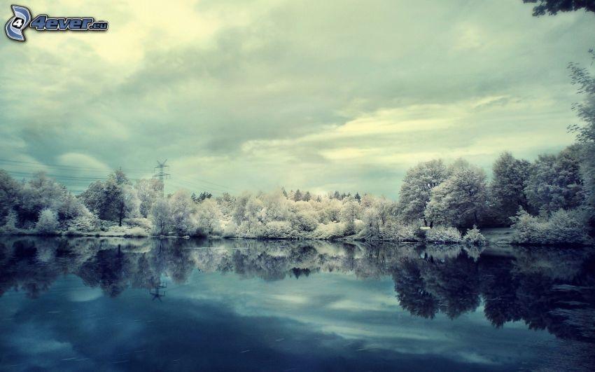 snöklädda träd, sjö, spegling