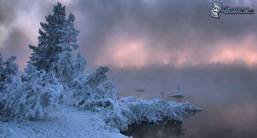 snöklädda träd, sjö