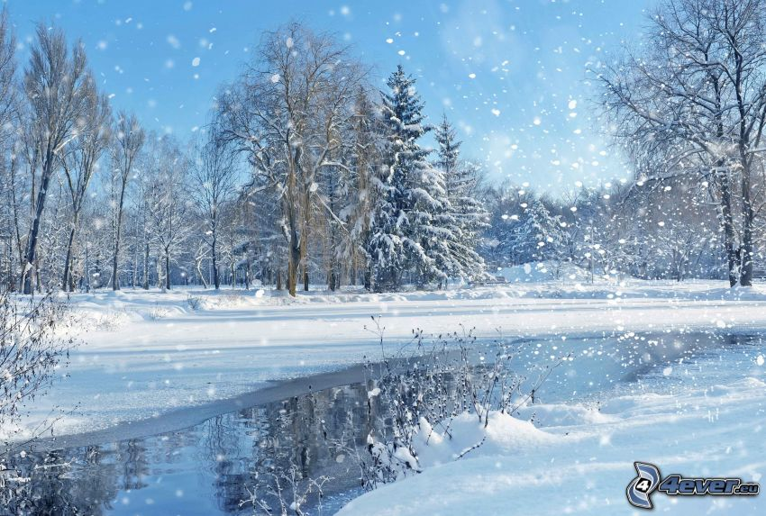 snöklädda träd, snöfall, flod