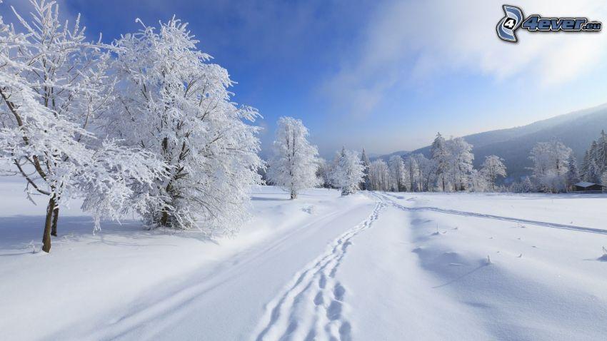 snöklädda träd, spår i snön
