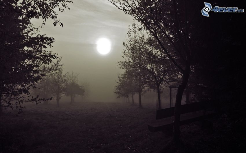 sol, dimma, träd, bänk