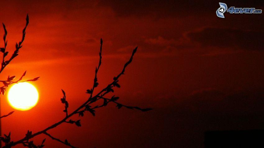 sol, silhuetter av grenar, röd himmel