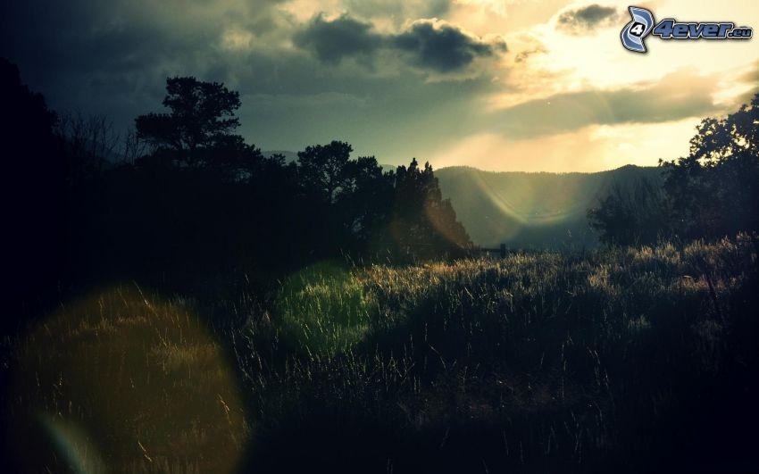 solnedgång, äng, träd