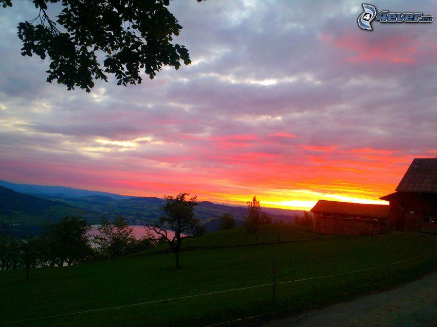 solnedgång, hus, gräs, träd
