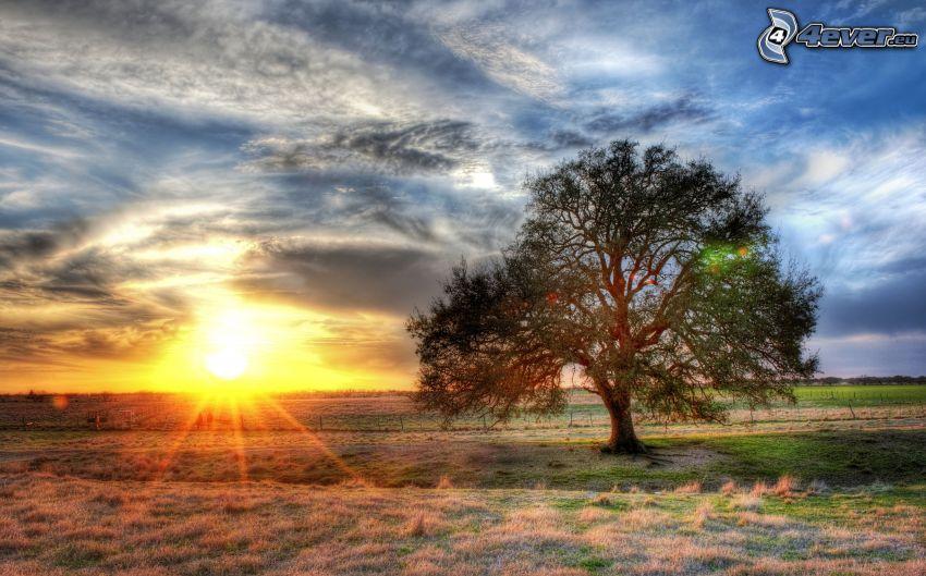 solnedgång bakom fält, ensamt träd, Texas, HDR