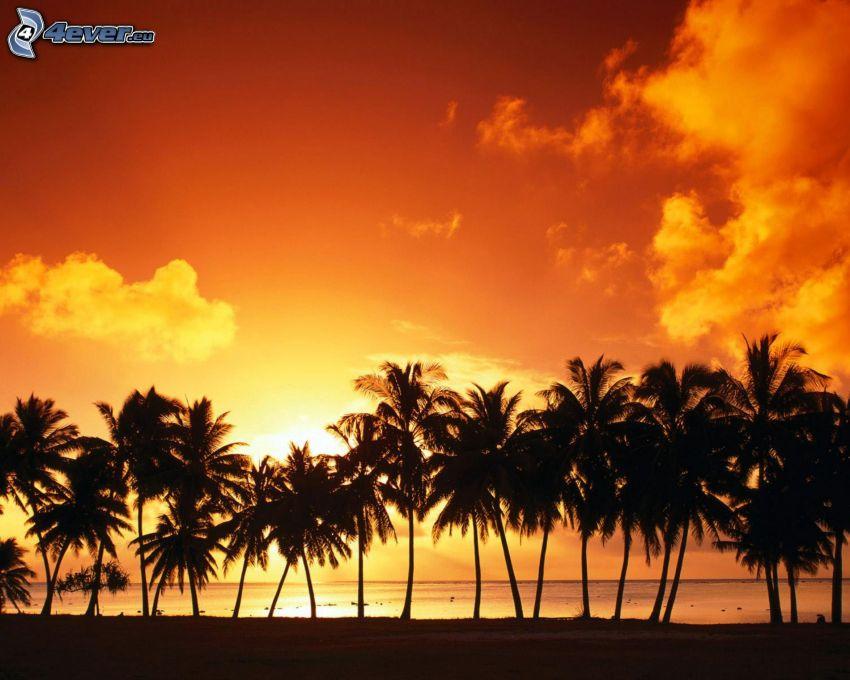 solnedgång bakom palmträd, palmer vid solnedgången, hav, strand