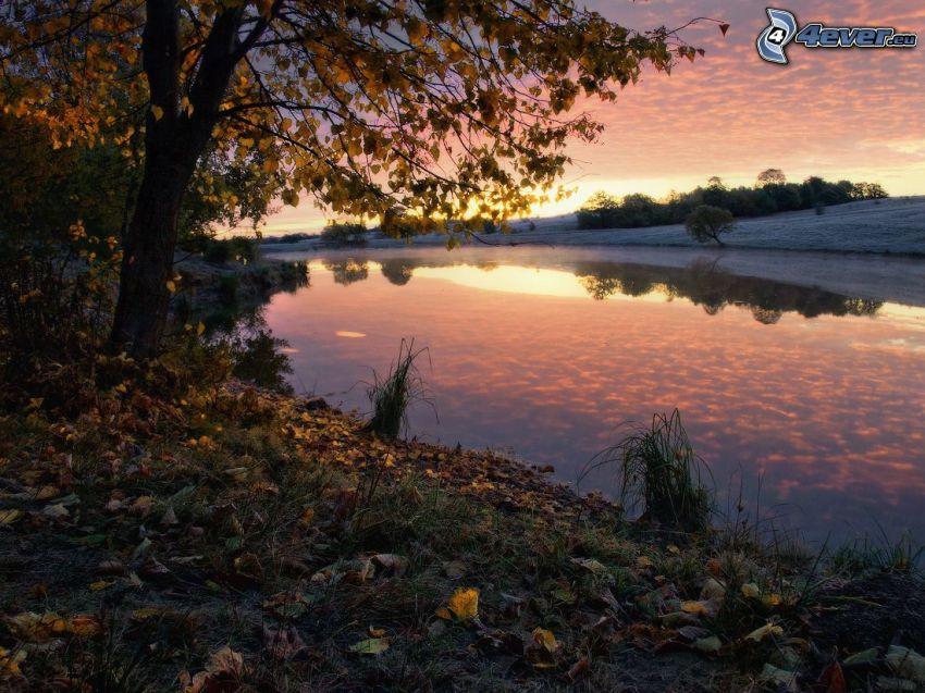 solnedgång bakom sjö, höstträd, nedfallna löv