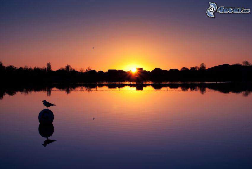solnedgång bakom sjö, hus, fågel