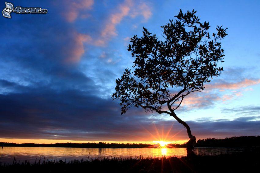 solnedgång bakom sjö, siluett av ett träd, solstrålar