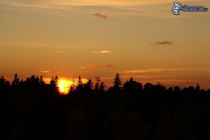 solnedgång bakom skogen, gul himmel, silhuett av skog