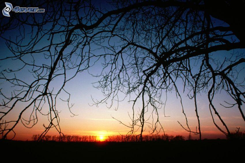 solnedgång bakom skogen, siluett av ett träd