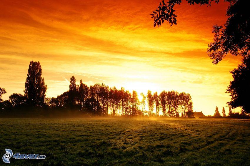 solnedgång bakom skogen, siluetter av träd, åker, orange himmel