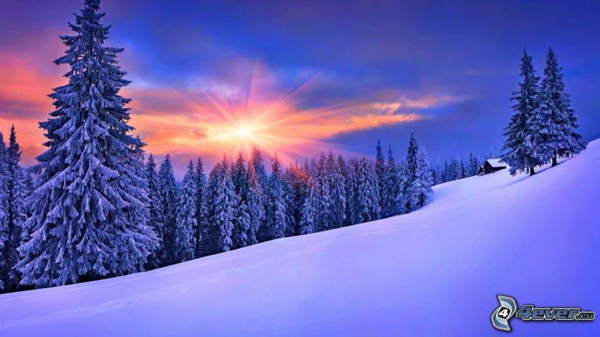 solnedgång bakom skogen, snöklädda träd, backe