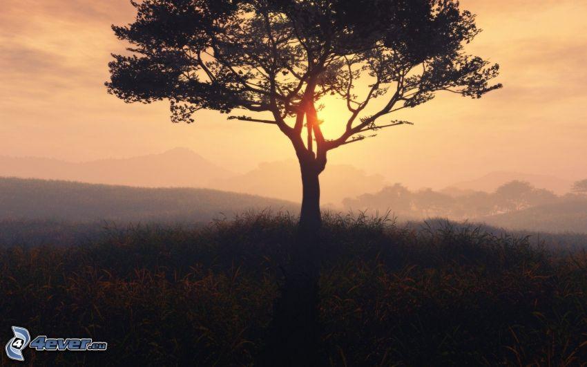 solnedgång bakom träd, ensamt träd, siluett av ett träd