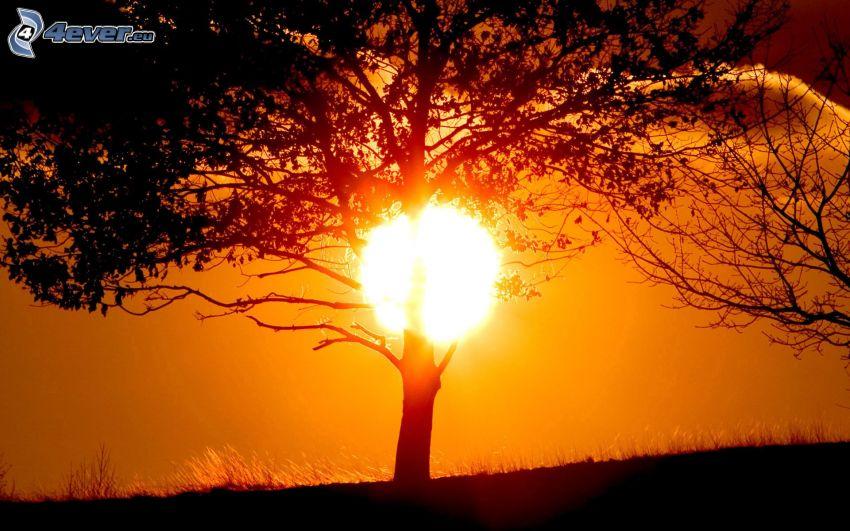 solnedgång bakom träd, siluett av ett träd