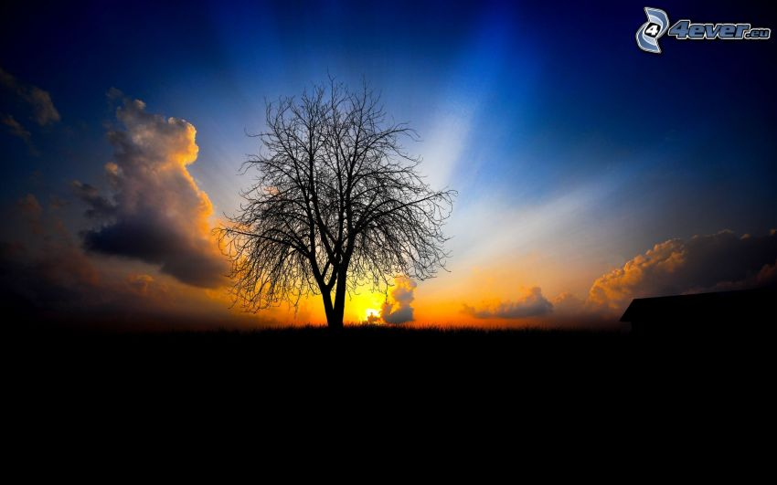 solnedgång bakom träd, solstrålar, siluett av ett träd, moln