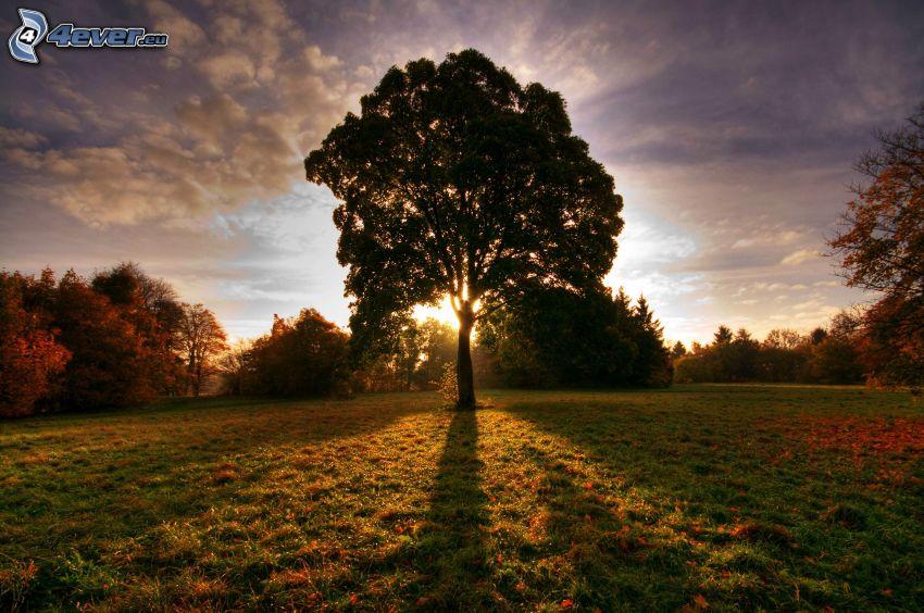 solnedgång bakom träd