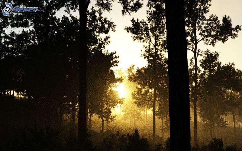 solnedgång i skogen, siluetter av träd