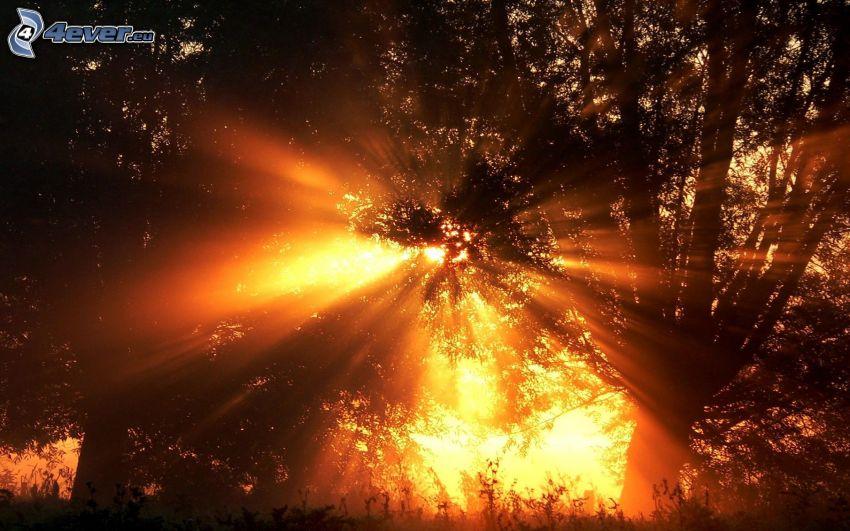 solnedgång i skogen, solstrålar