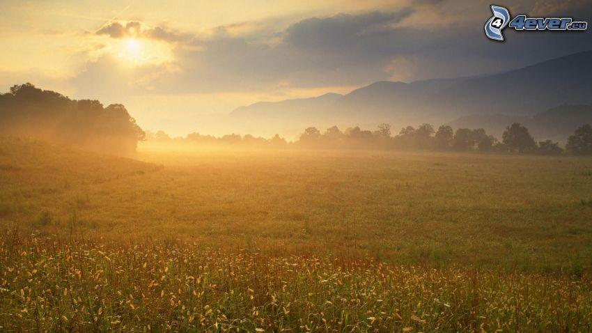 solnedgång över äng, markdimma, bergskedja, träd