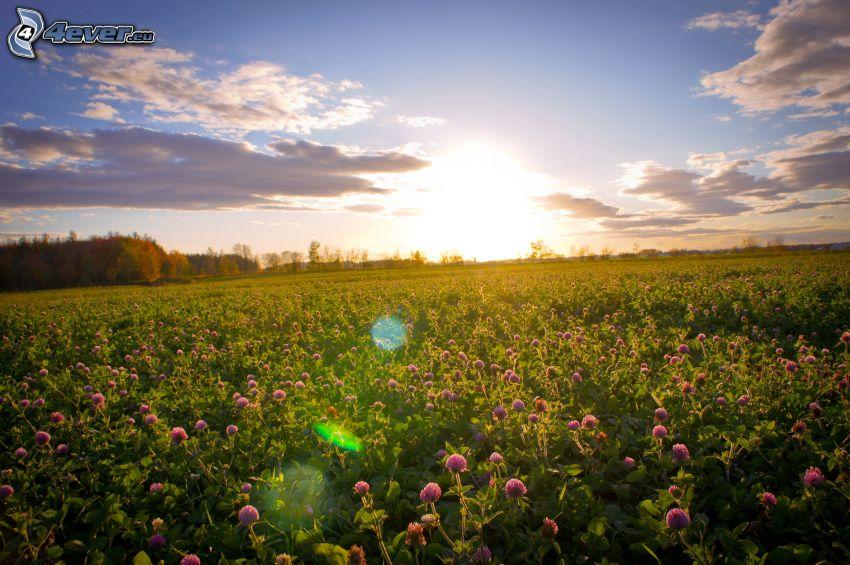 solnedgång över äng, moln