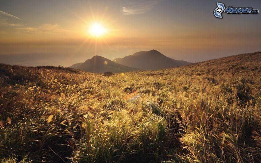 solnedgång över äng, torrt gräs, kullar