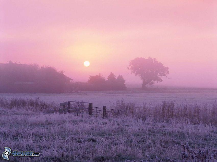 solnedgång över äng, träd, lila himmel, staket