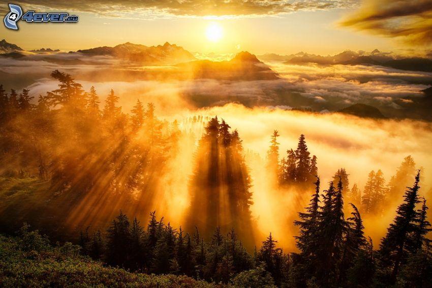 solnedgång över berg, ovanför molnen, skog, solstrålar